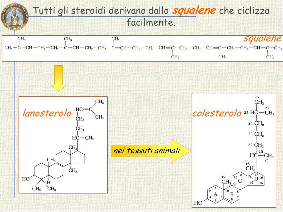 STEROIDI Gli steroidi sono derivati da un idrocarburo tetraciclico saturo CICLOPENTANOPERIDROFENANTRENE 19 18 AB CD