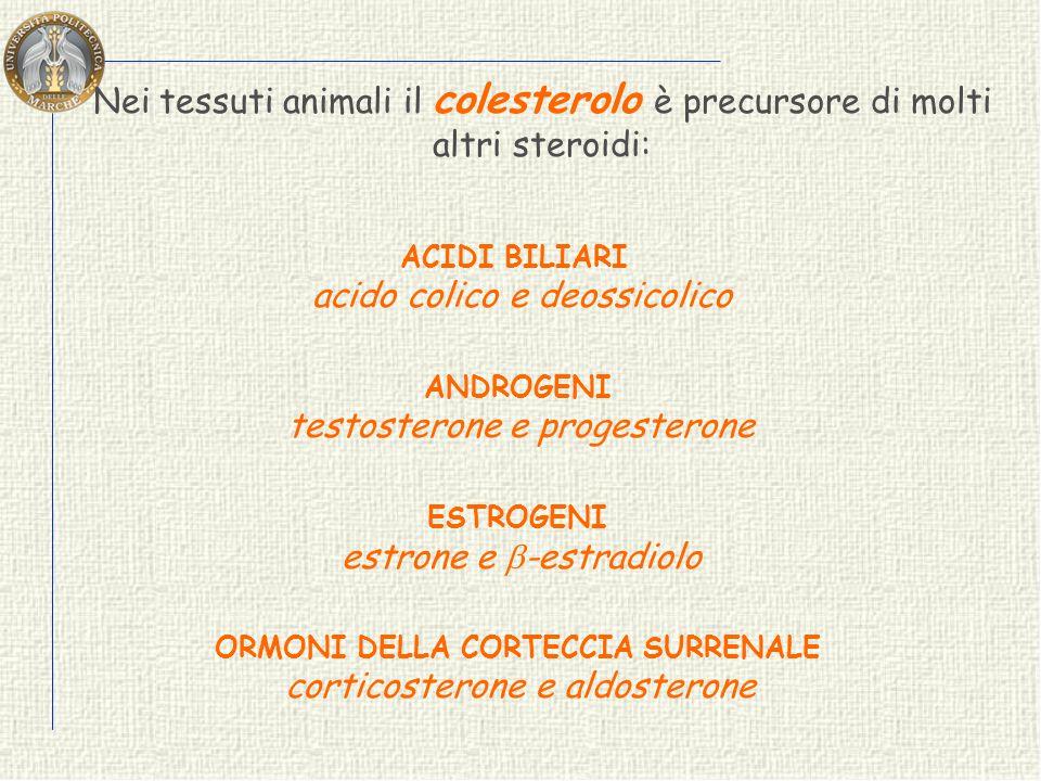 Tutti gli steroidi derivano dallo squalene che ciclizza facilmente. squalene lanosterolo colesterolo nei tessuti animali