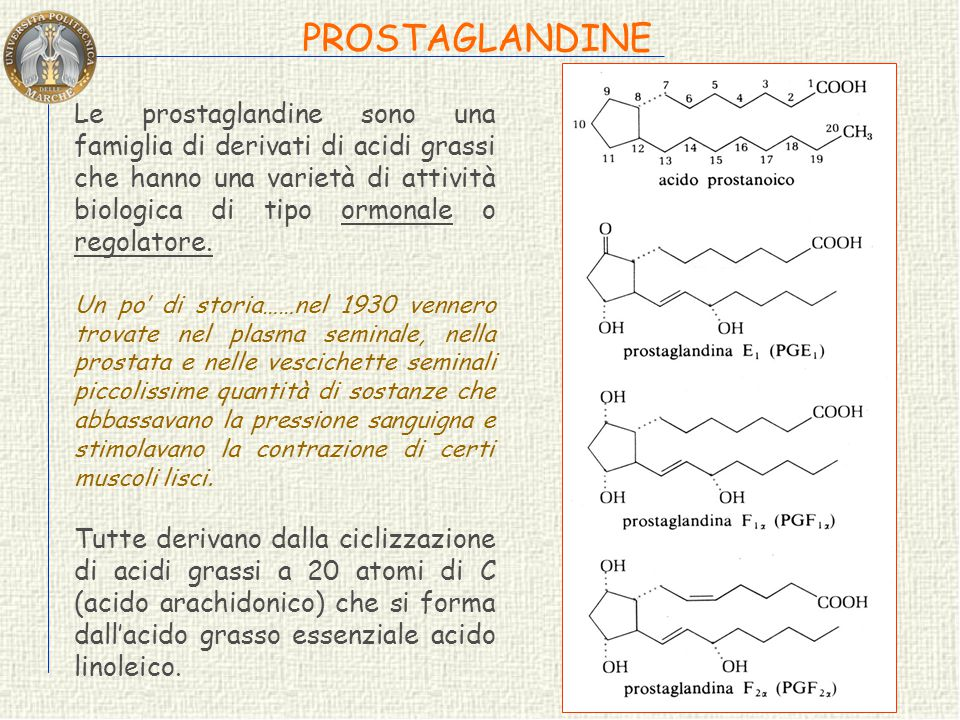 Nei tessuti animali il colesterolo è precursore di molti altri steroidi: ACIDI BILIARI acido colico e deossicolico ANDROGENI testosterone e progestero