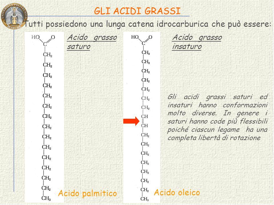 GLI ACIDI GRASSI Tutti possiedono una lunga catena idrocarburica che può essere: Gli acidi grassi saturi ed insaturi hanno conformazioni molto diverse.