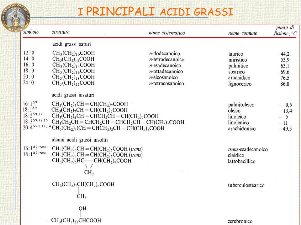 GLI ACIDI GRASSI Tutti possiedono una lunga catena idrocarburica che può essere: Gli acidi grassi saturi ed insaturi hanno conformazioni molto diverse