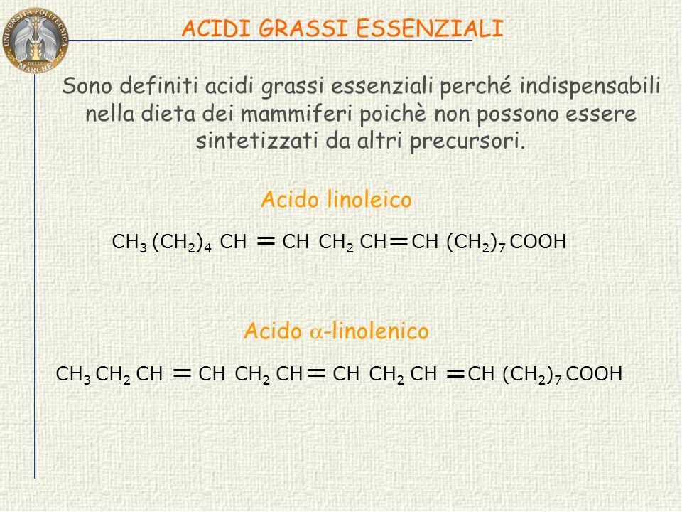 ACIDI GRASSI ESSENZIALI Sono definiti acidi grassi essenziali perché indispensabili nella dieta dei mammiferi poichè non possono essere sintetizzati da altri precursori.
