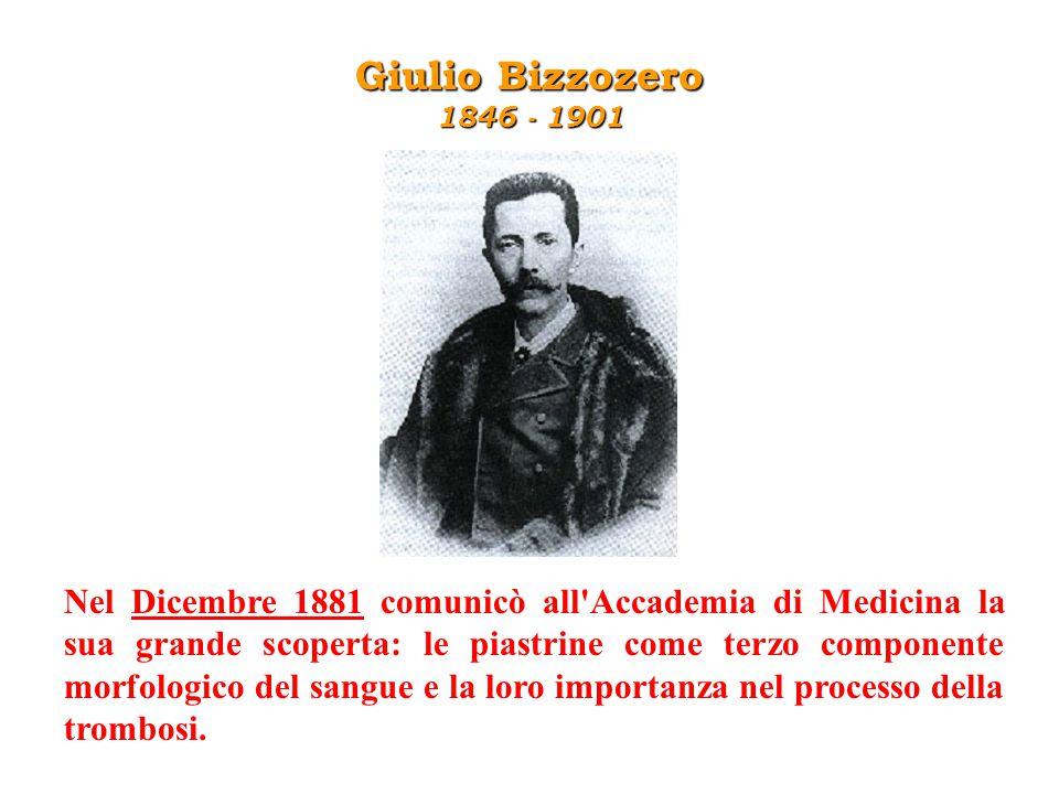 Giulio Bizzozero 1846 - 1901 Nel Dicembre 1881 comunicò all'Accademia di Medicina la sua grande scoperta: le piastrine come terzo componente morfologi