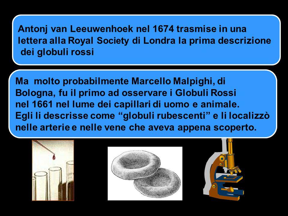 Antonj van Leeuwenhoek nel 1674 trasmise in una lettera alla Royal Society di Londra la prima descrizione dei globuli rossi Ma molto probabilmente Mar