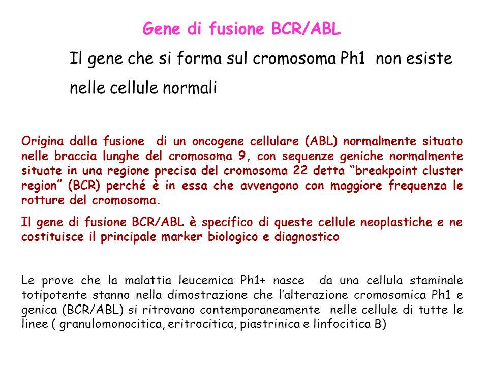 Gene di fusione BCR/ABL Il gene che si forma sul cromosoma Ph1 non esiste nelle cellule normali Origina dalla fusione di un oncogene cellulare (ABL) n