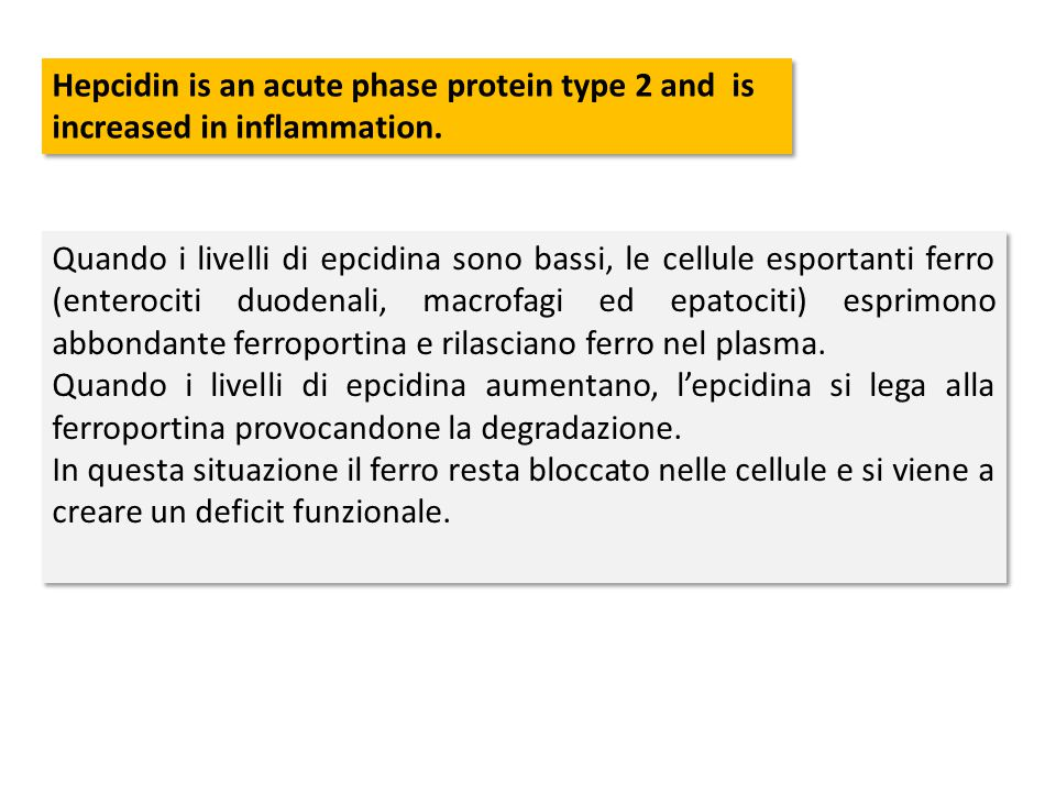 Hepcidin is an acute phase protein type 2 and is increased in inflammation. Quando i livelli di epcidina sono bassi, le cellule esportanti ferro (ente