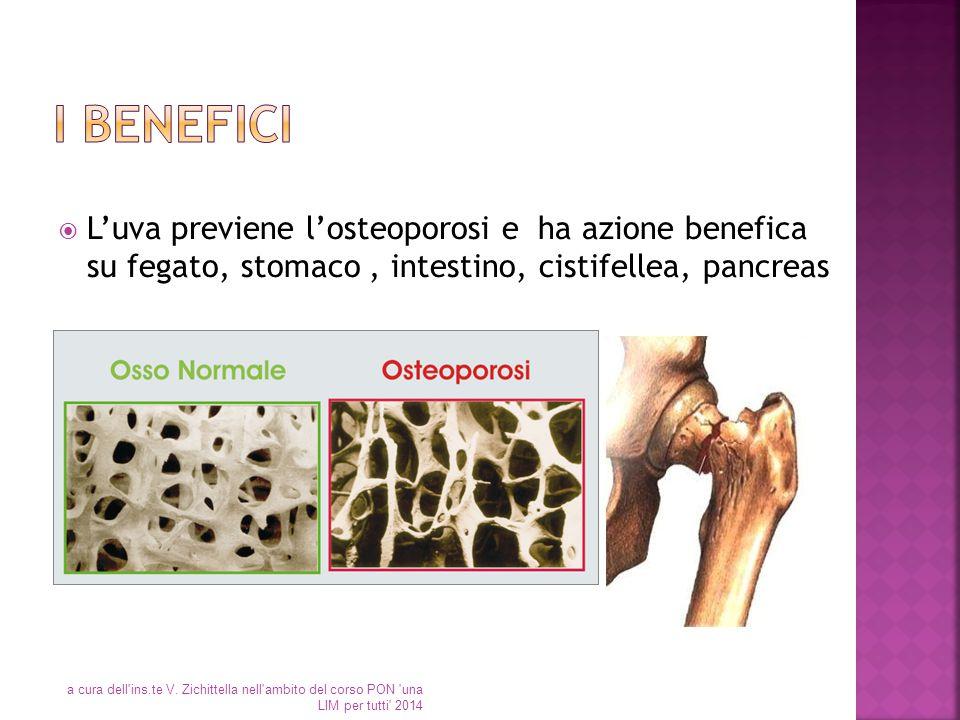  L'uva previene l'osteoporosi e ha azione benefica su fegato, stomaco, intestino, cistifellea, pancreas a cura dell'ins.te V. Zichittella nell'ambito