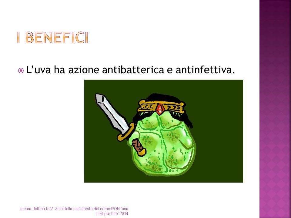  L'uva ha azione antibatterica e antinfettiva. a cura dell'ins.te V. Zichittella nell'ambito del corso PON 'una LIM per tutti' 2014