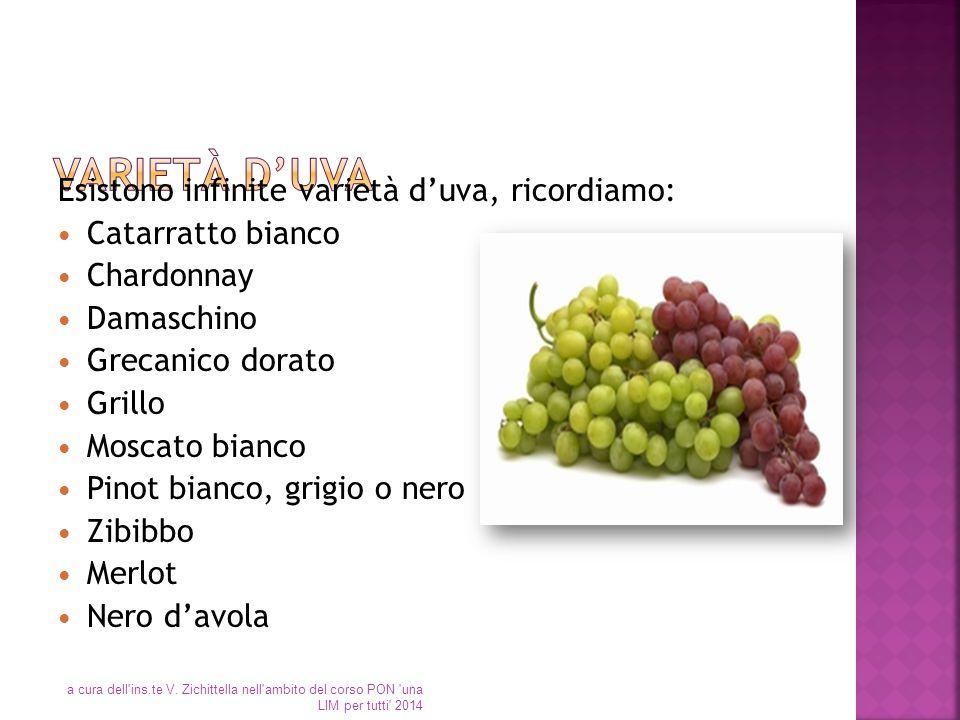 Esistono infinite varietà d'uva, ricordiamo: Catarratto bianco Chardonnay Damaschino Grecanico dorato Grillo Moscato bianco Pinot bianco, grigio o ner