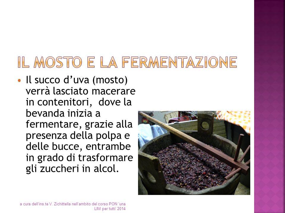 Il succo d'uva (mosto) verrà lasciato macerare in contenitori, dove la bevanda inizia a fermentare, grazie alla presenza della polpa e delle bucce, en