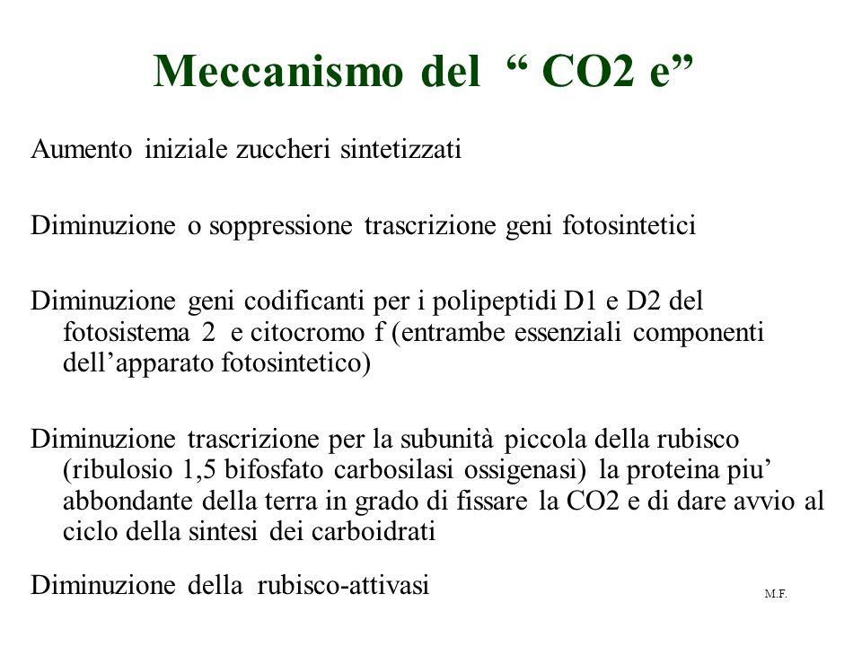 """M.F. Meccanismo del """" CO2 e"""" Aumento iniziale zuccheri sintetizzati Diminuzione o soppressione trascrizione geni fotosintetici Diminuzione geni codifi"""