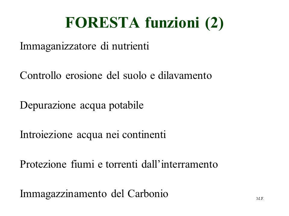 M.F. FORESTA funzioni (2) Immaganizzatore di nutrienti Controllo erosione del suolo e dilavamento Depurazione acqua potabile Introiezione acqua nei co