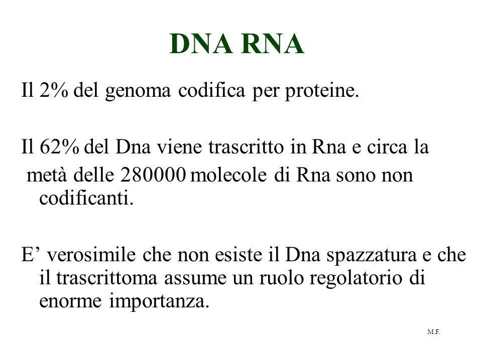 M.F. DNA RNA Il 2% del genoma codifica per proteine. Il 62% del Dna viene trascritto in Rna e circa la metà delle 280000 molecole di Rna sono non codi