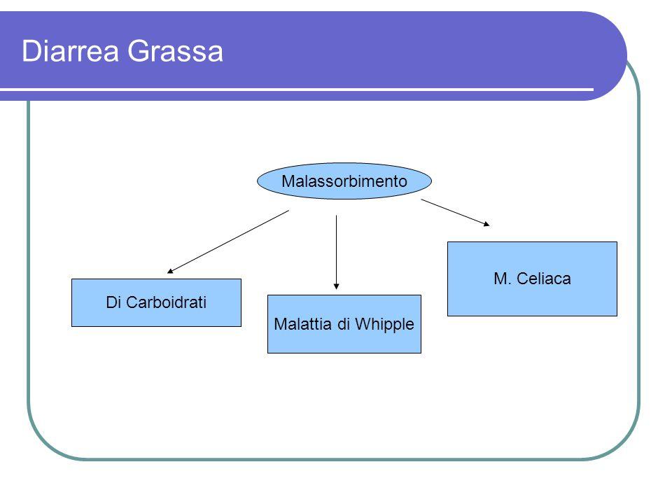 Diarrea Grassa Malassorbimento Di Carboidrati M. Celiaca Malattia di Whipple