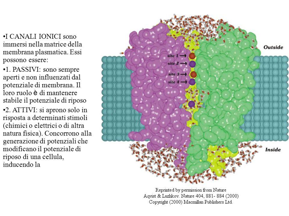 I CANALI IONICI sono immersi nella matrice della membrana plasmatica.