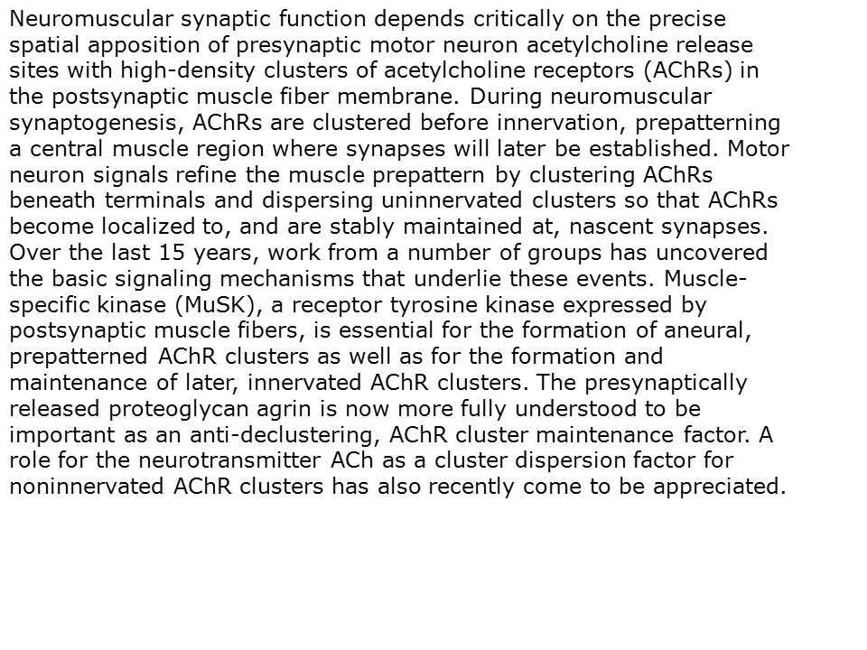 Neuromuscular synaptic function depends critically on the precise spatial apposition of presynaptic motor neuron acetylcholine release sites with high-density clusters of acetylcholine receptors (AChRs) in the postsynaptic muscle fiber membrane.