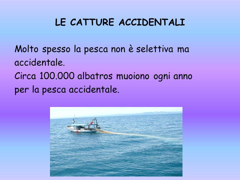 LE CATTURE ACCIDENTALI Molto spesso la pesca non è selettiva ma accidentale.