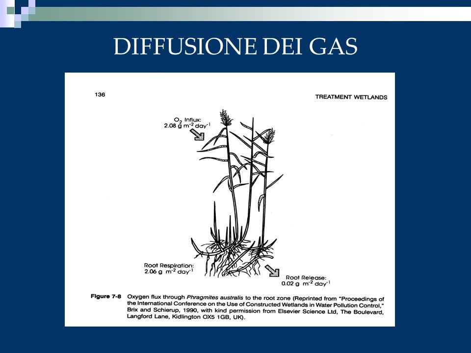 DIFFUSIONE DEI GAS