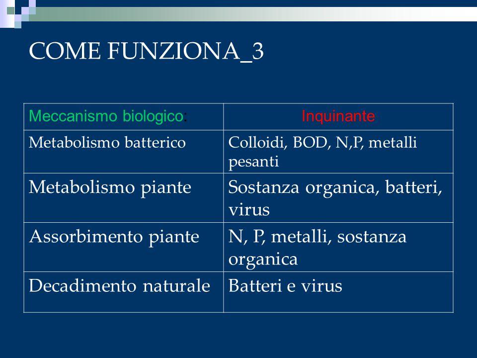 COME FUNZIONA_3 Meccanismo biologico:Inquinante Metabolismo battericoColloidi, BOD, N,P, metalli pesanti Metabolismo pianteSostanza organica, batteri,