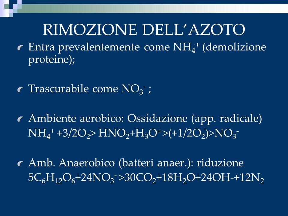 RIMOZIONE DELL'AZOTO Entra prevalentemente come NH 4 + (demolizione proteine); Trascurabile come NO 3 - ; Ambiente aerobico: Ossidazione (app. radical