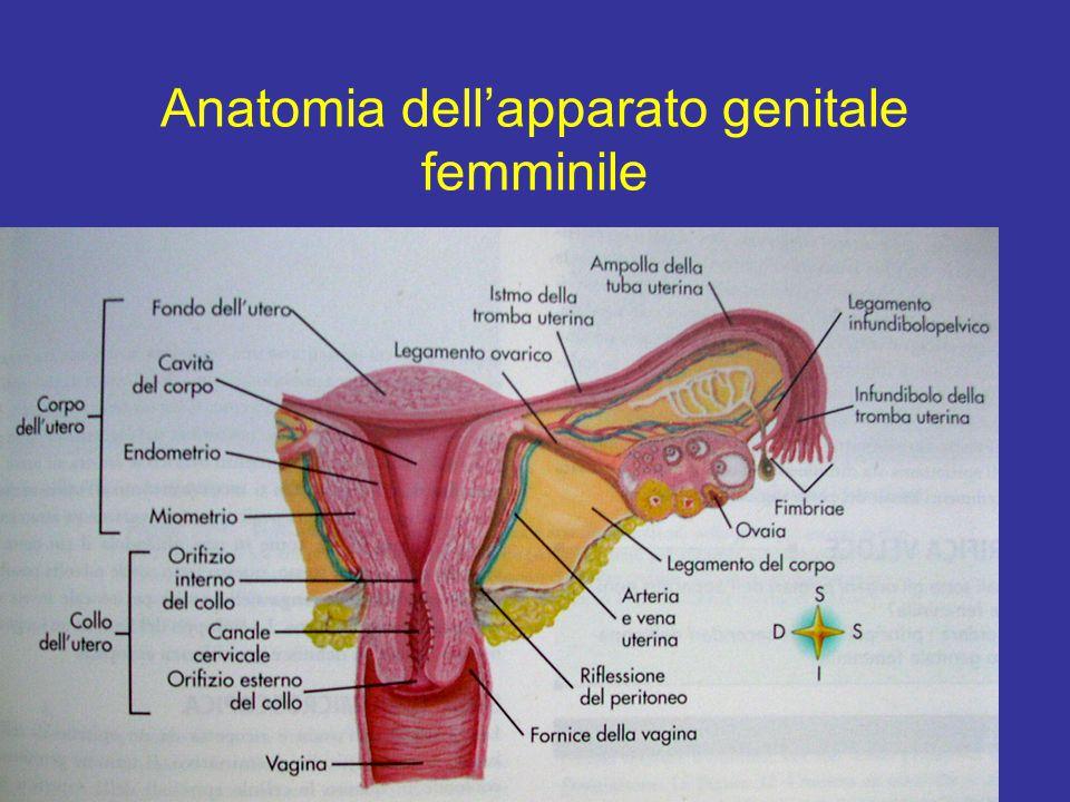 L'oogenesi inizia durante lo sviluppo embrio-fetale Embrione di 4-6 settimaneEmbrione di 4-6 settimane oogoni –Le cellule germinali primordiali si differenziano in oogoni Si moltiplicano per mitosi