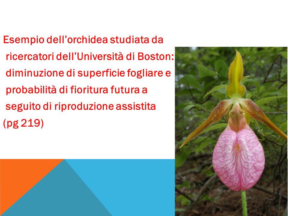 Esempio dell'orchidea studiata da ricercatori dell'Università di Boston: diminuzione di superficie fogliare e probabilità di fioritura futura a seguit