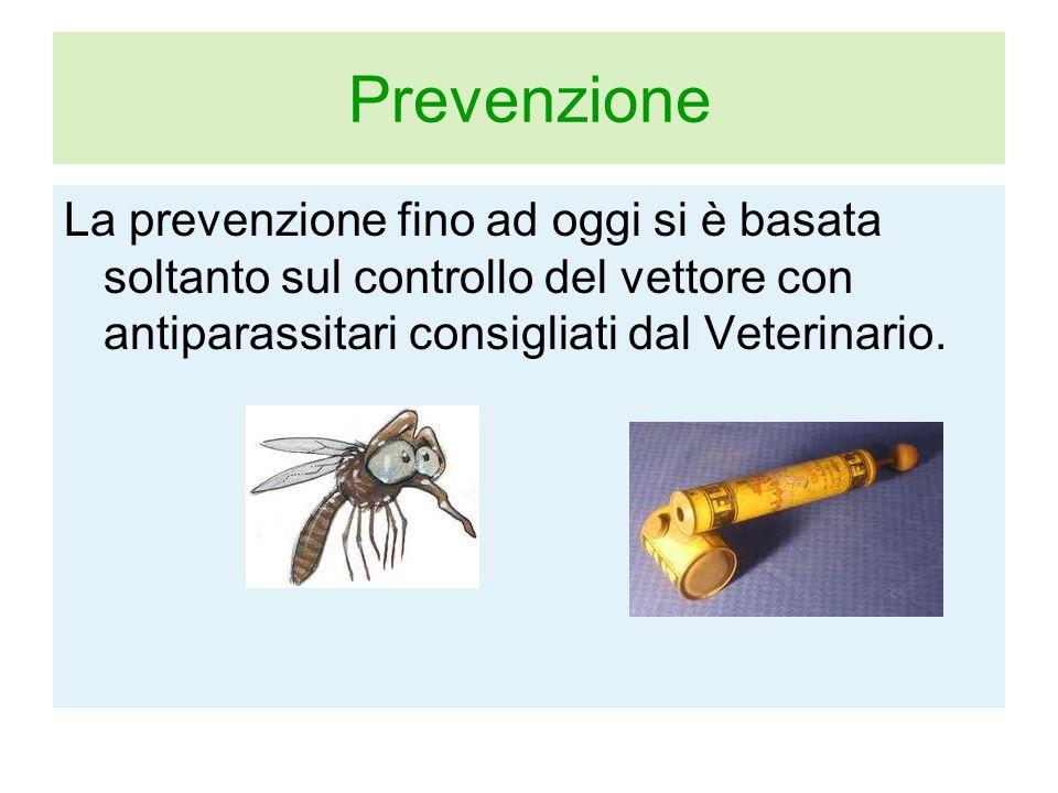 Prevenzione La prevenzione fino ad oggi si è basata soltanto sul controllo del vettore con antiparassitari consigliati dal Veterinario.