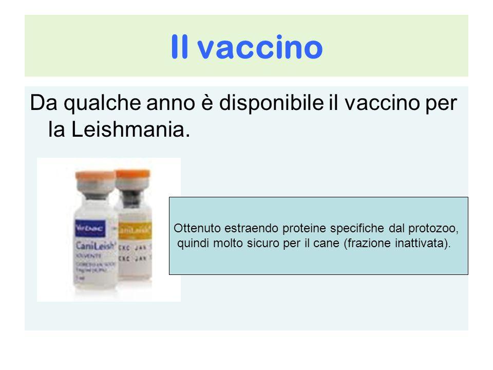 Il vaccino Da qualche anno è disponibile il vaccino per la Leishmania. Ottenuto estraendo proteine specifiche dal protozoo, quindi molto sicuro per il