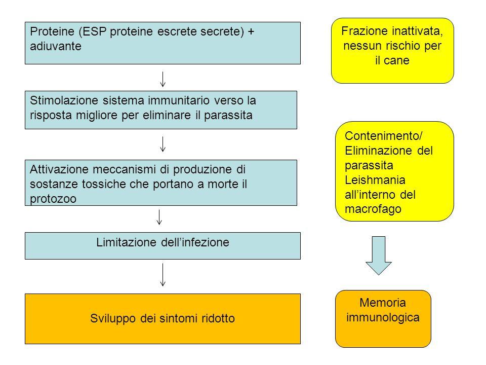 Proteine (ESP proteine escrete secrete) + adiuvante Frazione inattivata, nessun rischio per il cane Stimolazione sistema immunitario verso la risposta