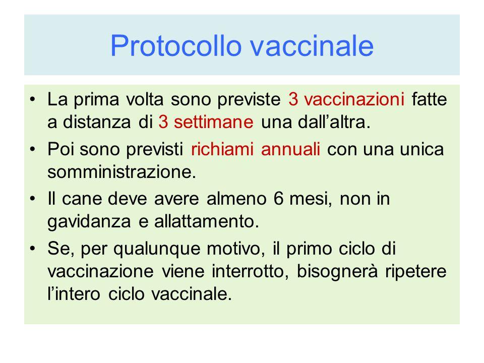 Protocollo vaccinale La prima volta sono previste 3 vaccinazioni fatte a distanza di 3 settimane una dall'altra. Poi sono previsti richiami annuali co