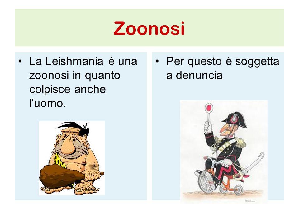 Zoonosi La Leishmania è una zoonosi in quanto colpisce anche l'uomo. Per questo è soggetta a denuncia