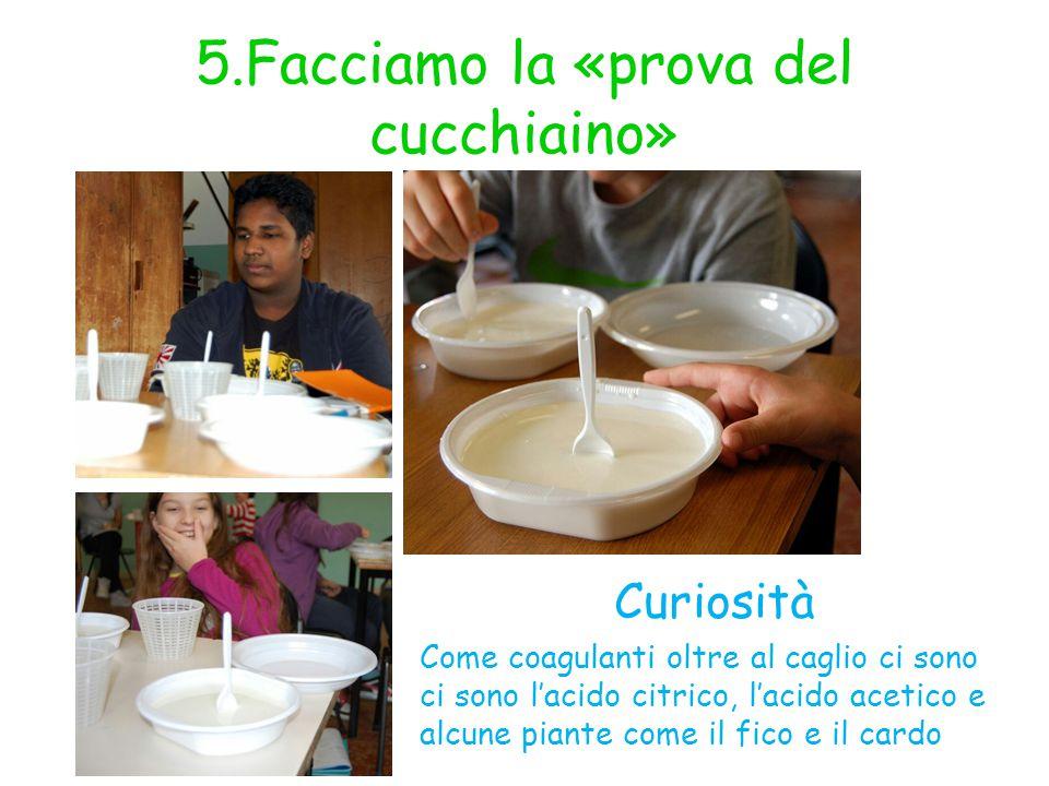 5.Facciamo la «prova del cucchiaino» Curiosità Come coagulanti oltre al caglio ci sono ci sono l'acido citrico, l'acido acetico e alcune piante come i