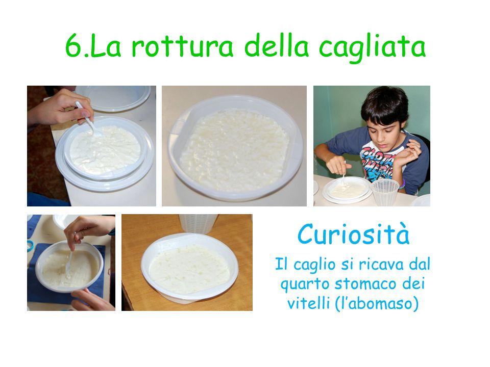 7.Versiamo la cagliata nella fuscella Curiosità Per fare formaggi uguali fra loro si usa il latte pastorizzato; per diversificare i sapori si usa il latte crudo.