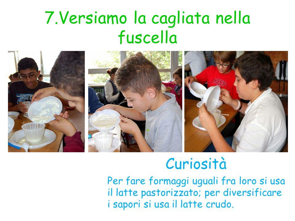 7.Versiamo la cagliata nella fuscella Curiosità Per fare formaggi uguali fra loro si usa il latte pastorizzato; per diversificare i sapori si usa il l