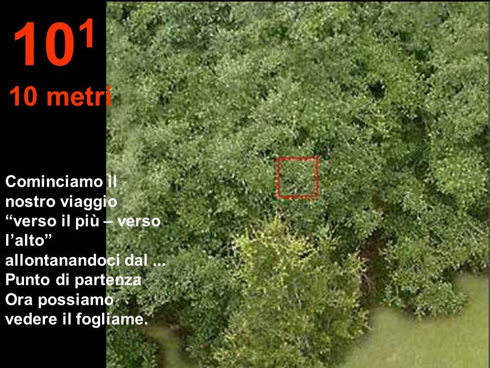 Distanza fino a un ramo di foglie, con il braccio teso... 10 0 1 metro