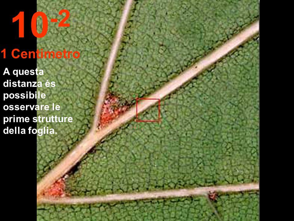 Avvicinandoci a 10 cm possiamo distinguere una foglia dal ramo. 10 -1 10 Centimetri