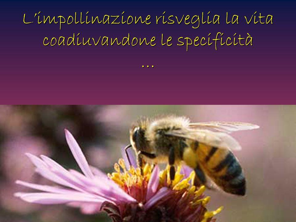 L'impollinazione risveglia la vita coadiuvandone le specificità …