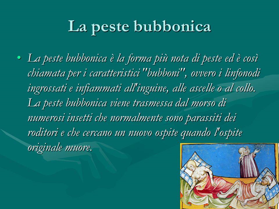 La peste bubbonica La peste bubbonica è la forma più nota di peste ed è così chiamata per i caratteristici