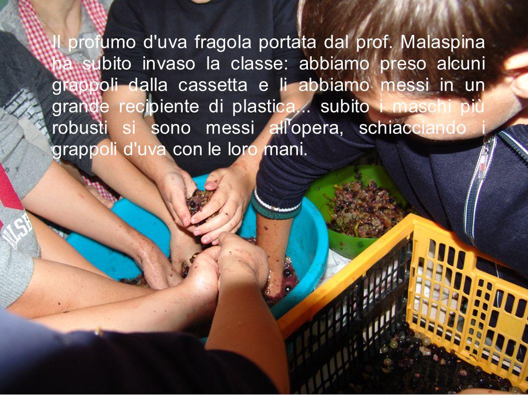 Il profumo d'uva fragola portata dal prof. Malaspina ha subito invaso la classe: abbiamo preso alcuni grappoli dalla cassetta e li abbiamo messi in un