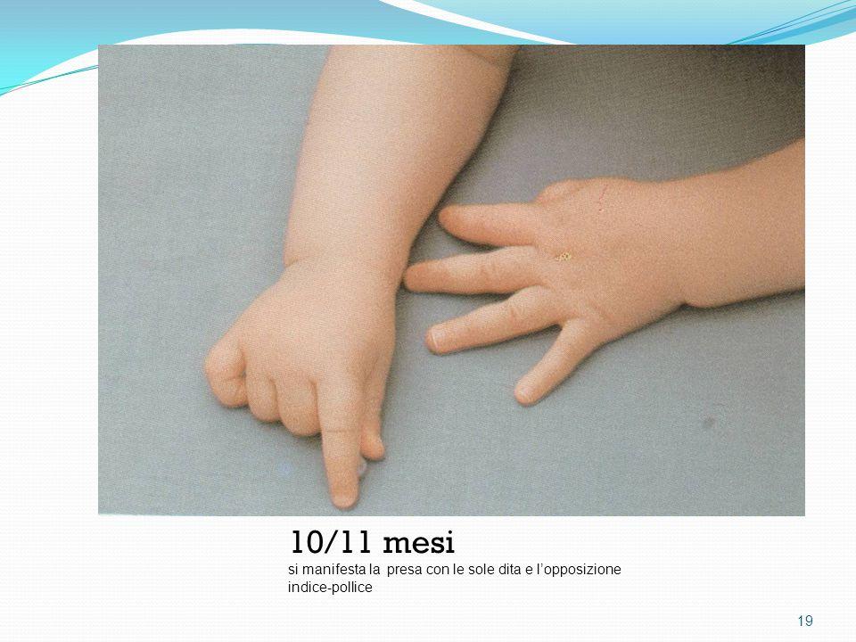 10/11 mesi si manifesta la presa con le sole dita e l'opposizione indice-pollice 19