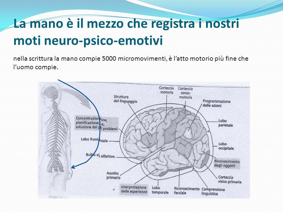 La mano è il mezzo che registra i nostri moti neuro-psico-emotivi nella scrittura la mano compie 5000 micromovimenti, è l'atto motorio più fine che l'uomo compie.