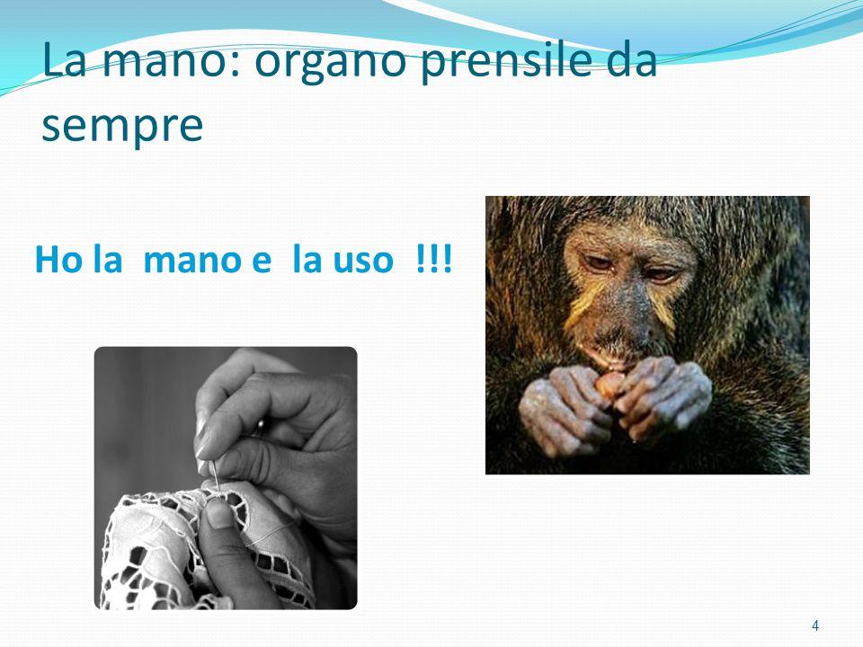 La mano: organo prensile da sempre 4 Ho la mano e la uso !!!