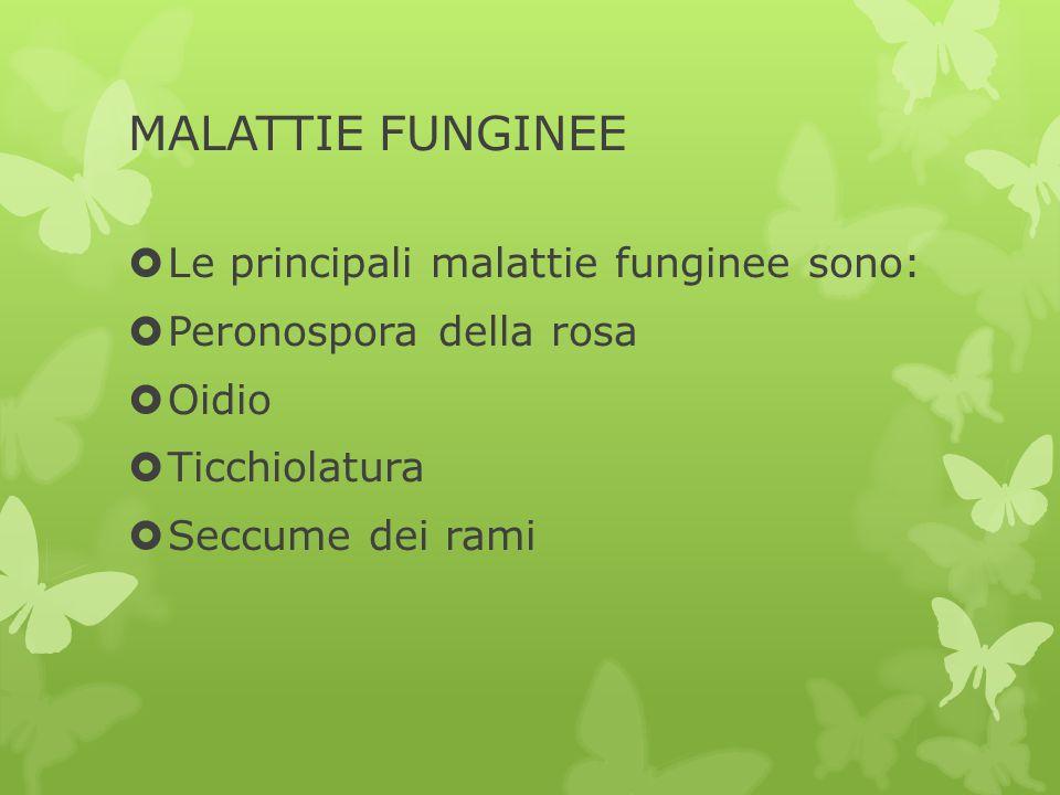 MALATTIE FUNGINEE  Le principali malattie funginee sono:  Peronospora della rosa  Oidio  Ticchiolatura  Seccume dei rami