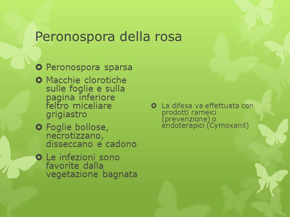 Peronospora della rosa  Peronospora sparsa  Macchie clorotiche sulle foglie e sulla pagina inferiore feltro miceliare grigiastro  Foglie bollose, n