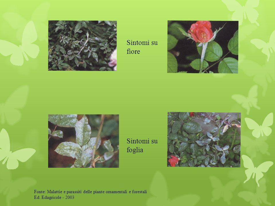 Sintomi su fiore Sintomi su foglia Fonte: Malattie e parassiti delle piante ornamentali e forestali Ed. Edagricole - 2003
