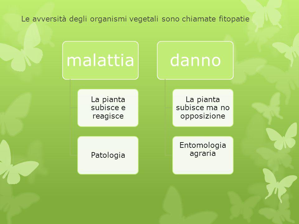 Le avversità degli organismi vegetali sono chiamate fitopatie malattia La pianta subisce e reagisce Patologia danno La pianta subisce ma no opposizion