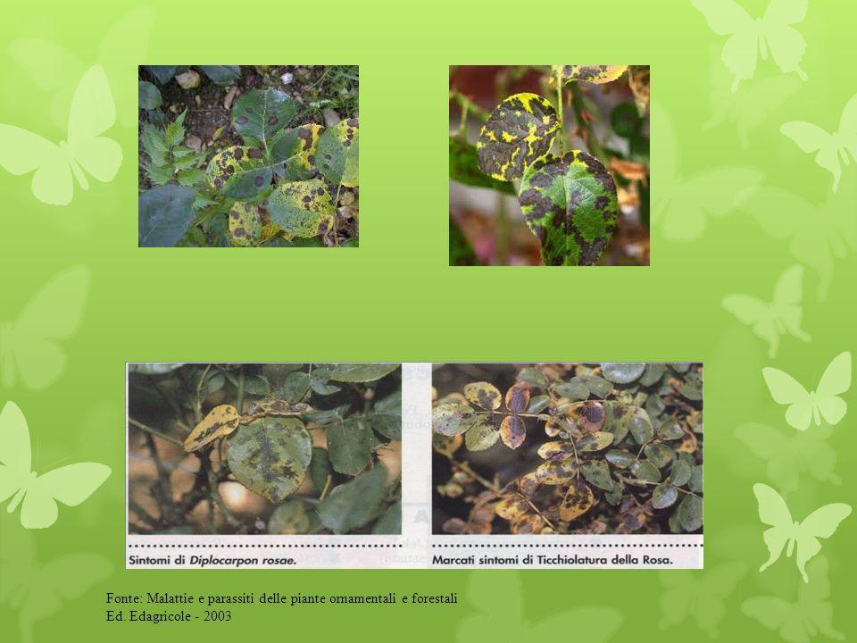 Fonte: Malattie e parassiti delle piante ornamentali e forestali Ed. Edagricole - 2003