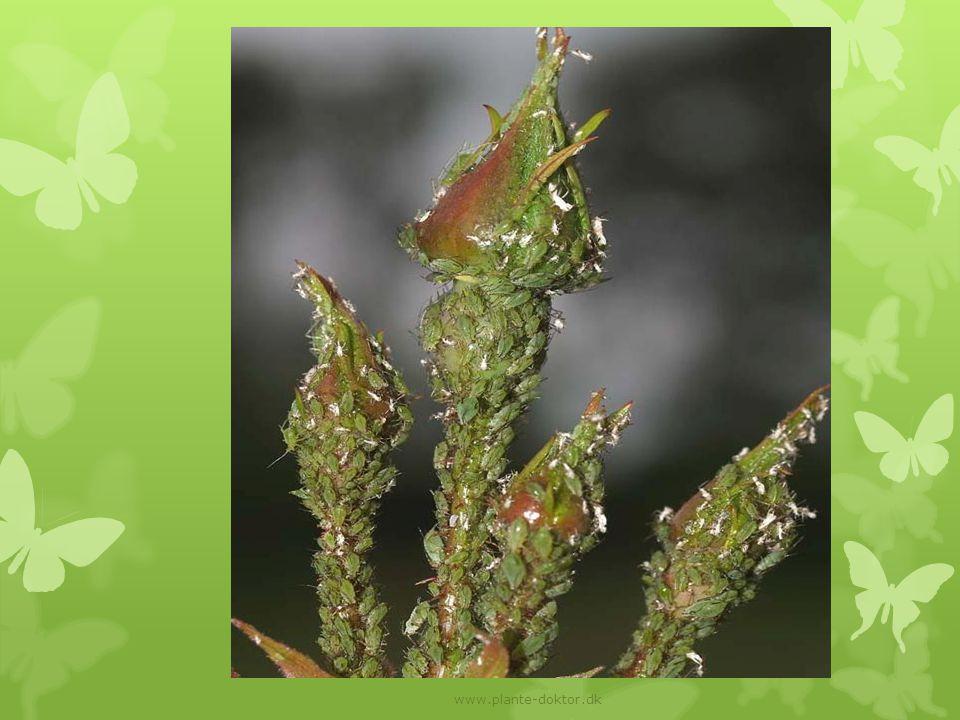 www.plante-doktor.dk