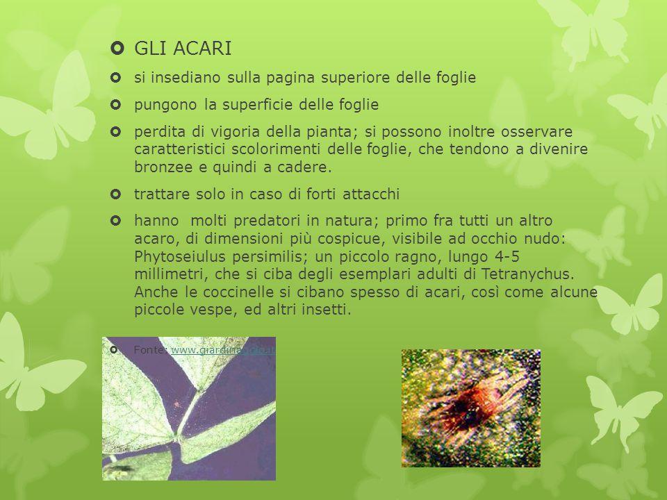  GLI ACARI  si insediano sulla pagina superiore delle foglie  pungono la superficie delle foglie  perdita di vigoria della pianta; si possono inol