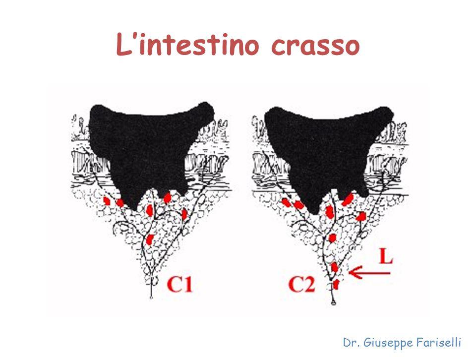 L'intestino crasso Dr. Giuseppe Fariselli
